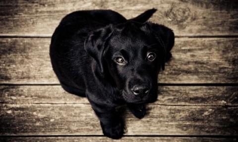 Dein Hund hat eine Hüftdysplasie – zwei Übungen zum Nachmachen