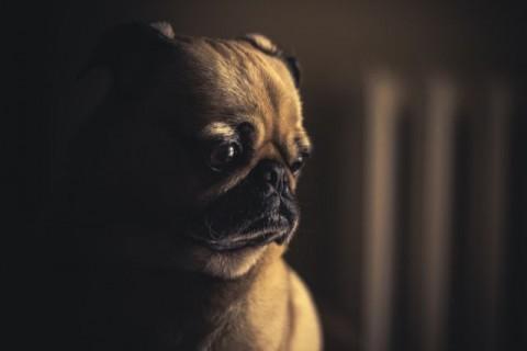 Massage beim Hund – mehr als nur Wellness