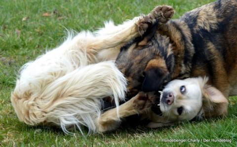 Hundefreunde – ein Leben lang