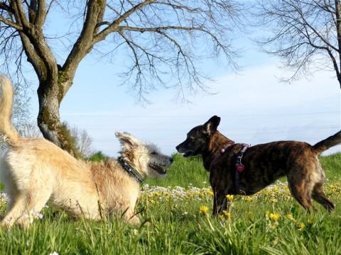 Geocaching und Hundeplatz