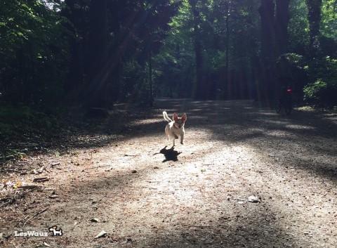 Der ängstliche Hund: wie kann ich ihm mit meiner Körpersprache helfen?