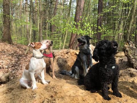 Wenn Frauchen mal weg muss: Unsere Checkliste für die beste Hundebetreuung