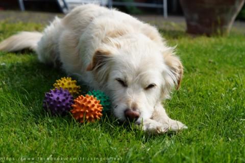 [Lola's Freunde lieben] den Igelball von Hunter