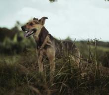 Zwei aktive Übungen die deinem Hund beim Kreuzbandriss helfen
