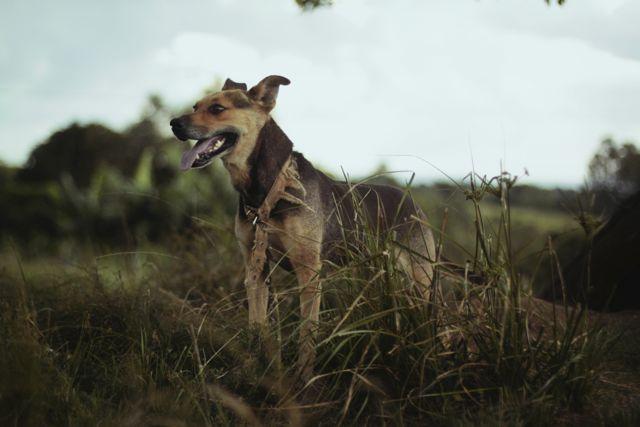 Kreuzbandriss Hund Übungen