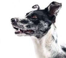 Zwei aktive Übungen für deinen Hund bei Ellbogendysplasie