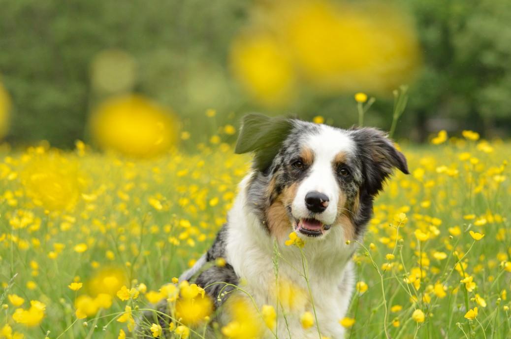 Sommerschur beim Hund