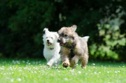 auf der Hundwiese – Spaß oder Frust ?