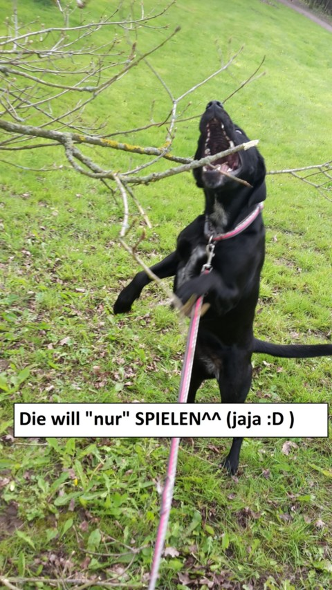 10 Arten von Hundebesitzern und nicht-Hundebesitzern, ohne die das Leben einfacher wäre!!! Teil 4/5