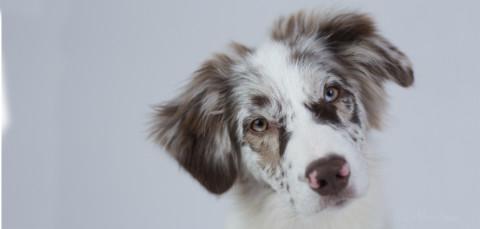 Wohnungssuche mit Hund – ein unmögliches Ding?