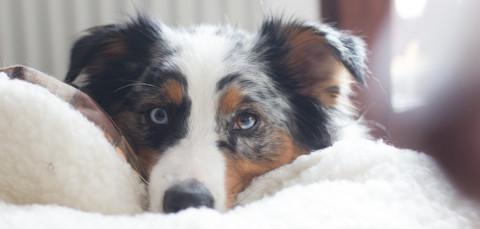 Umzug mit Hund