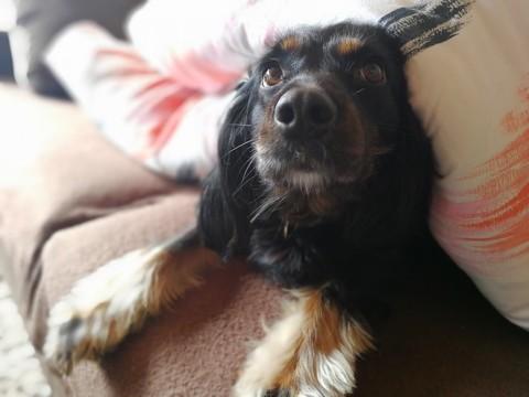Dürfen Hunde ins Bett? Ja oder Nein? Natürlich!