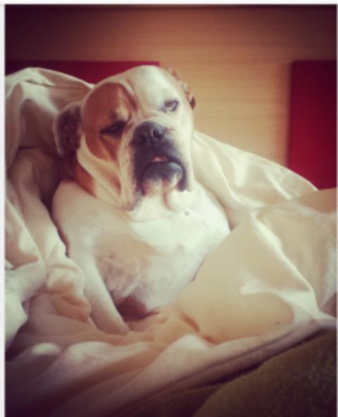 """""""Hund im Bett – ja oder nein?"""""""