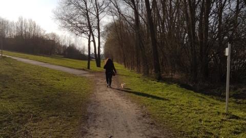 Fremdhunde und der Chihuahua an der Leine (Teil 2)