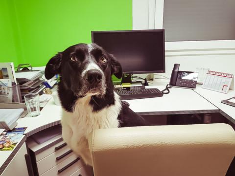 """""""Hund und Job – wie geht das?"""""""