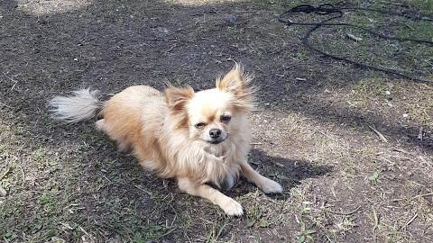 Die (unausgesprochenen) Vor- & Nachteile eines kleinen Hundes