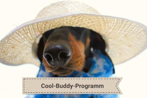 Cool Buddy – Sommer Sonne Sonnenschein- So verschaffst du deinem Hund am besten Abkühlung