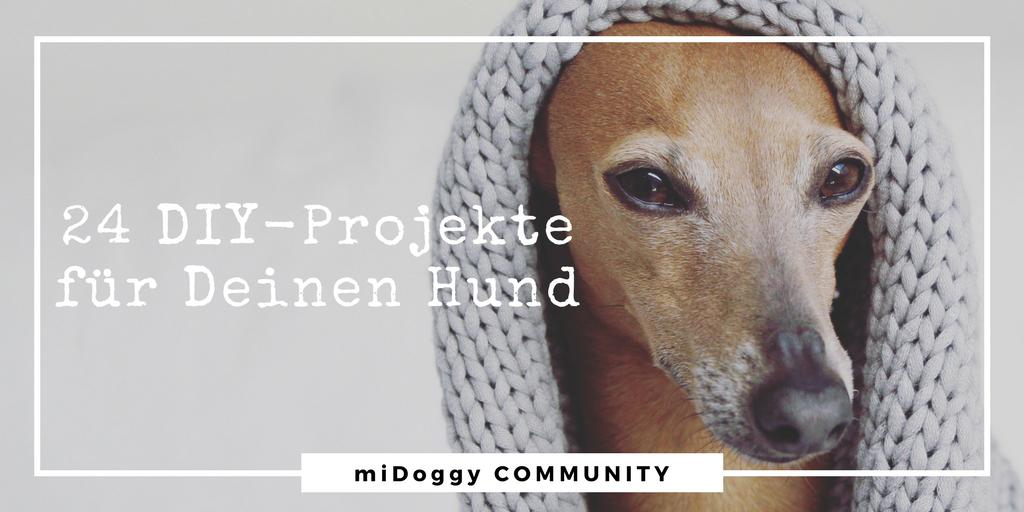 24 DIY Projekte für Deinen Hund