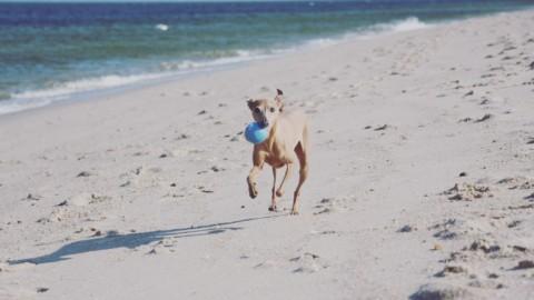 25 Bucket List Erlebnisse für Dich und Deinen Hund