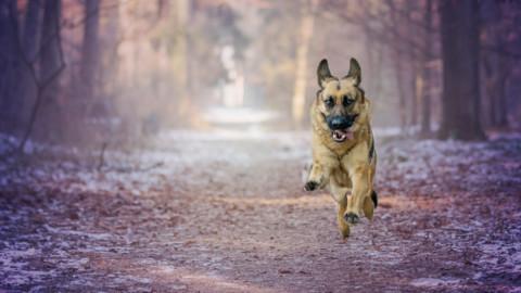Blutegeltherapie für den Hund