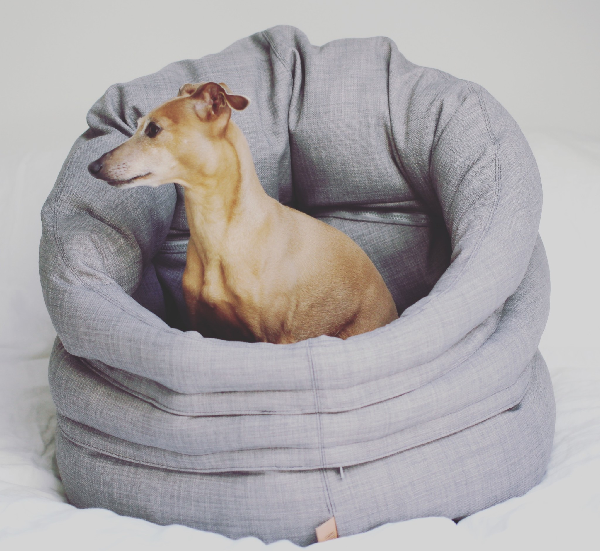 4 Tipps für einen entspannten Hund im Büro Hundebett besonders