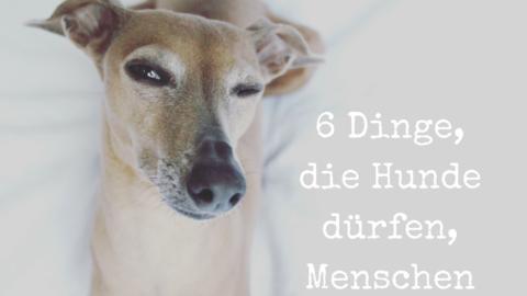 6 Dinge, die Hunde dürfen, Menschen aber nicht
