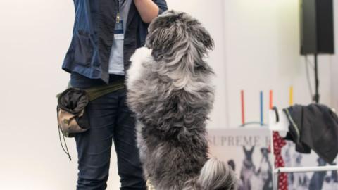 Gewinne 2 Freikarten für die Münchner Heimtiermesse 2017!
