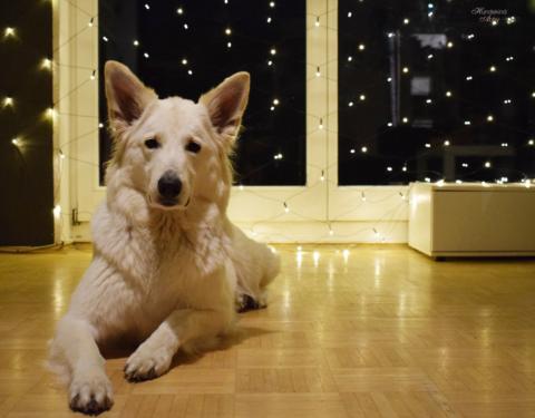 Tiere unterm Weihnachtsbaum – warum nicht?