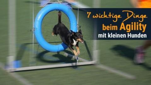 7 wichtige Dinge beim Agility mit kleinen Hunden