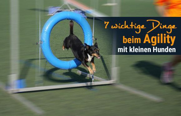 Agility-mit-kleinen-Hunden-1-1
