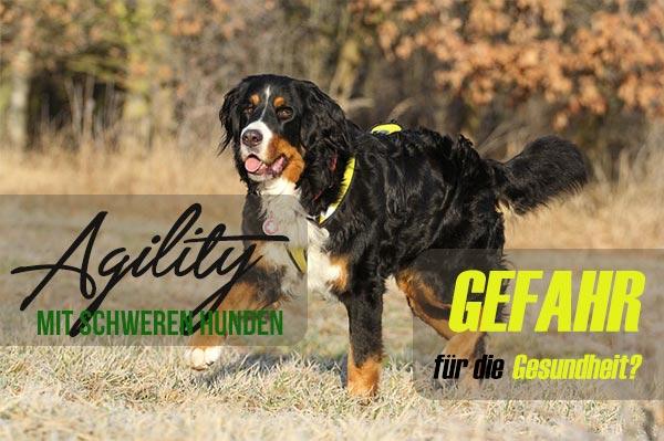 Agility-mit-schweren-Hunden