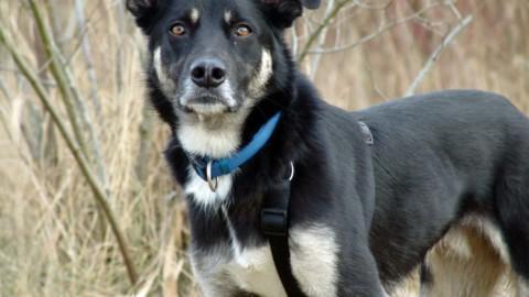 Blogparade: Leben mit schwierigem Hund