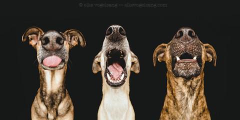Den Riecher für´s perfekte Hundefoto: Elke Vogelsang