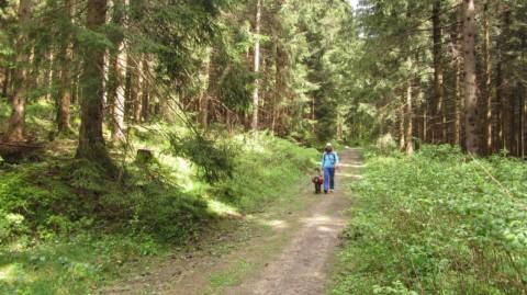 Meraner Höhenweg mit Hund – Reisevorbereitungen aus der Spur