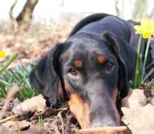 Ostern: sechs Ideen für Hundehalter – mit DIY, Inspirationen und Beschäftigung für den Hund