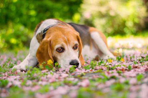 Tipps zur Hundefotografie