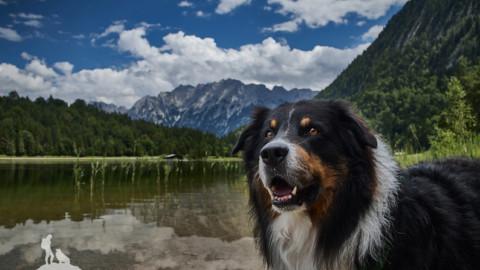 Bärenstarke Drei-Seen-Hundetour im Anblick des Karwendel