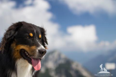 Provokante Frage: Muss der Hund eigentlich immer mit auf den Berg?