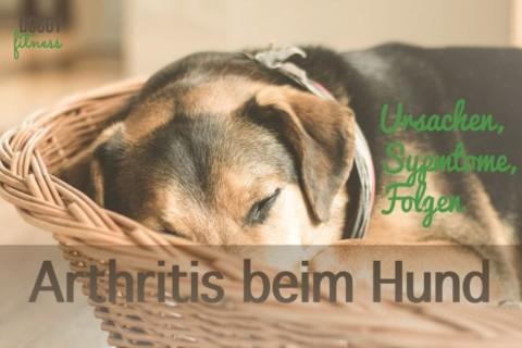 Arthritis beim Hund – Ursachen, Symptome und Folgen