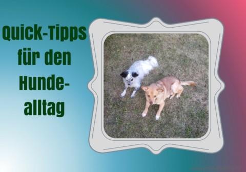Quick-Tipps für den Hundealltag: Ein Lerntagebuch für deinen Hund führen
