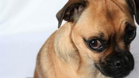 """Auch kleine Hunderassen sind """"normale"""" Hunde"""