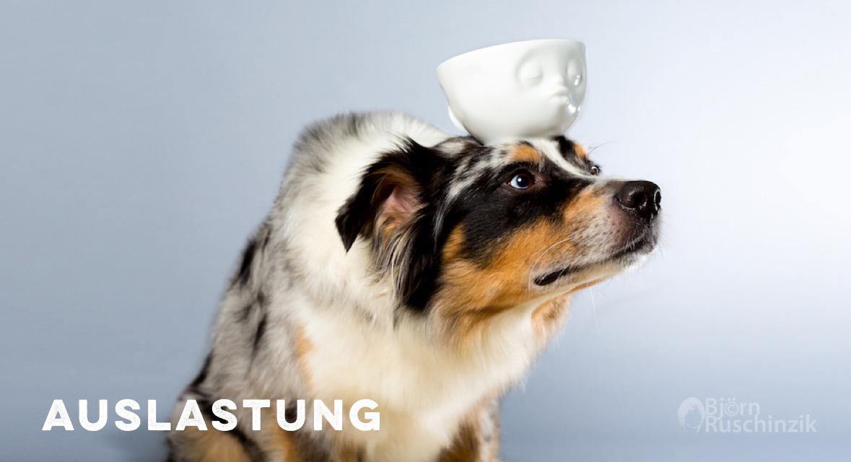 Auslastung Hunde Hundesport miDoggy