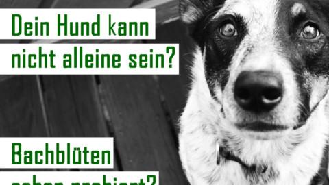 Dein Hund kann nicht alleine bleiben? Schon mal Bachblüten probiert?