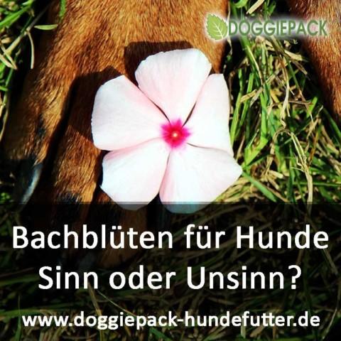 Bachblüten für Hunde. Sinn oder Unsinn?
