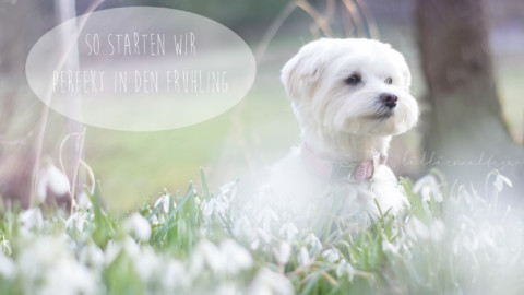 So starten wir perfekt in den Frühling!