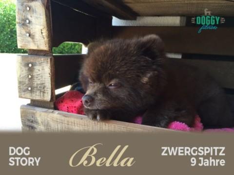 """Dog Story 4 """"Bella – kleiner Streber sagt dem Kreuzbandriss den Kampf an"""""""