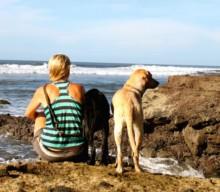 Warum du deinen Hund auf Reisen erziehen solltest!