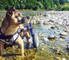 Lebensfreude 20 + – Interview zum Thema Handicaphund