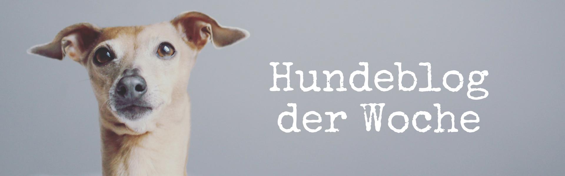 Blog Community miDoggy Hundeblog der Woche 2
