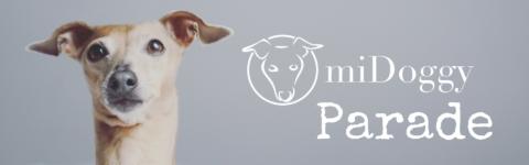 [miDoggy Parade] Hund allein daheim – wie klappt's?